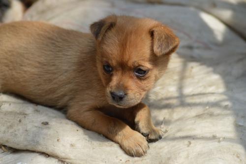 狗狗感冒、细小、犬瘟热症状的区别