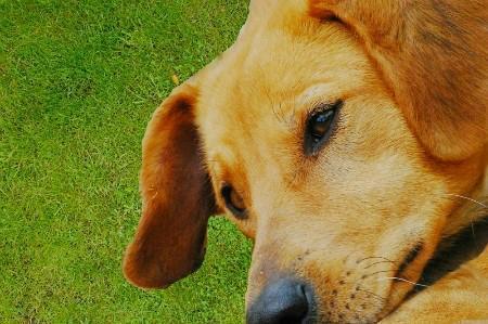 关于狂犬病的三大误区