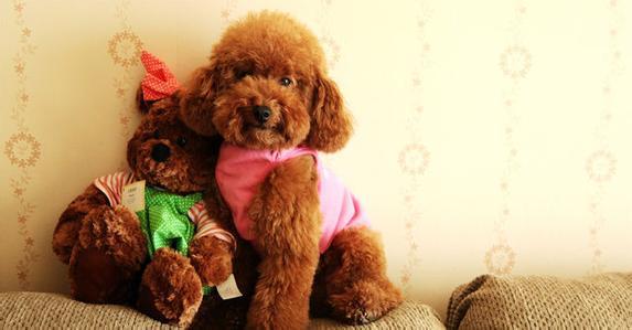 狗狗细小症状和治疗方法