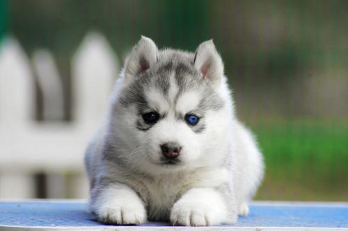 狗狗得冠状怎么办