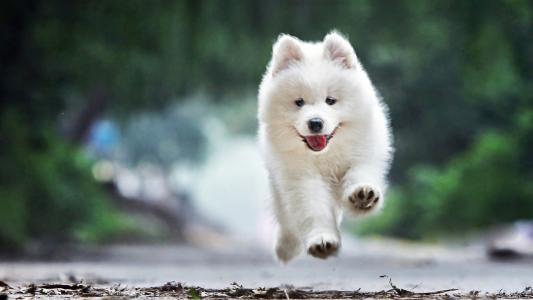 犬冠状病毒的病因及症状