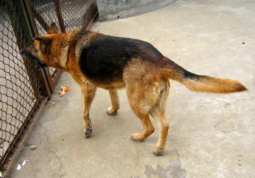 伪狂犬病的预防和治疗