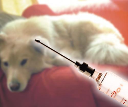 伪狂犬病的治疗方法