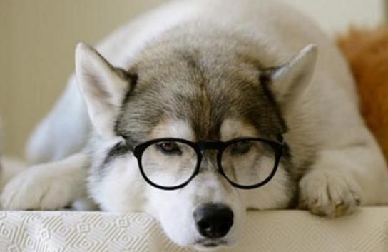 狗狗糖尿病的症状及病因