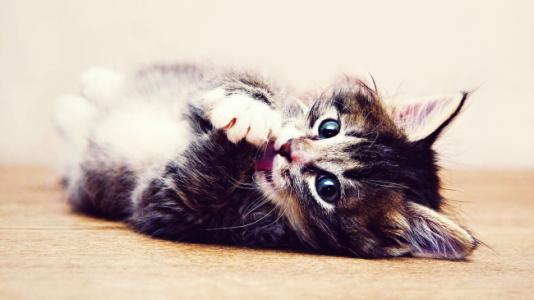 治疗猫咪副伤寒