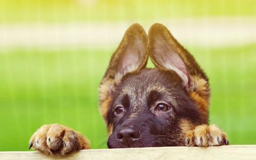 狗狗也会得结核病?
