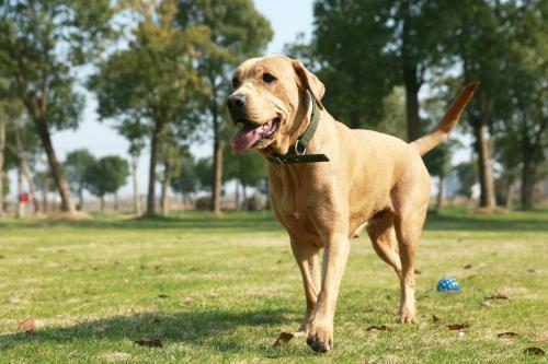 什么是犬大肠杆菌病