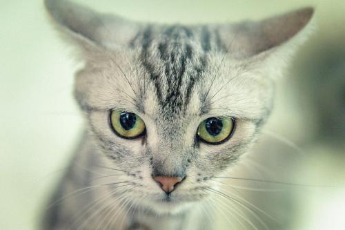 猫咪有皮肤真菌病该怎么办