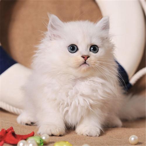 猫不同食物中毒的症状及预防