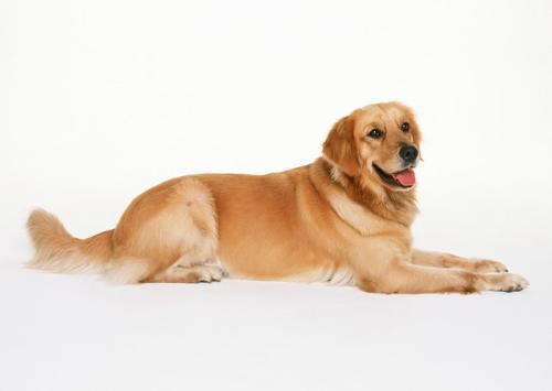 狗狗食物中毒的预防方法
