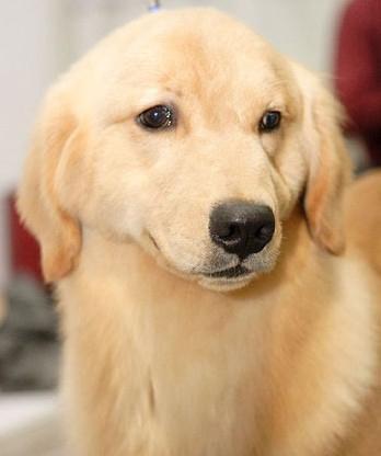 狗狗食物中毒的原因