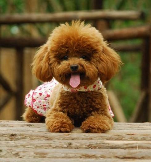 犬蛔虫病的诊断及防治