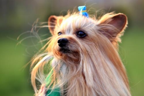 犬蛔虫病的症状及致病作用