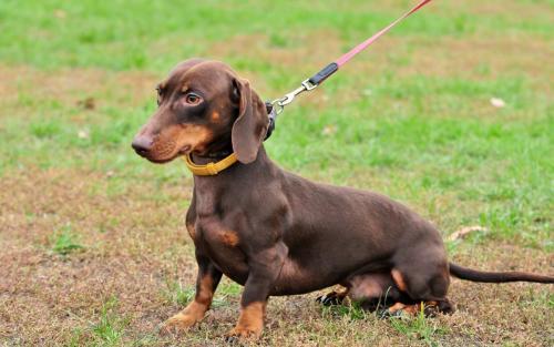 狗狗肠胃炎的病因、症状及防治