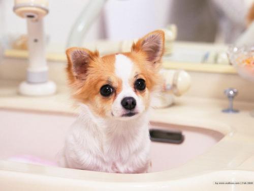 犬急性胃炎的病因及症状