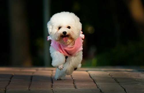 怎样治疗狗狗胃肠炎