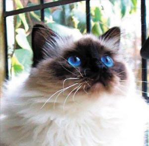 猫咪胃肠炎的治疗原则