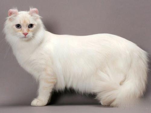 猫咪胃肠炎的临床症状