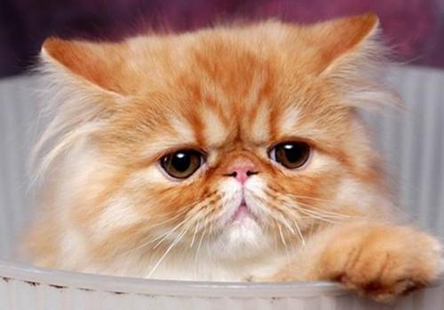 猫咪胃肠炎的病因分析