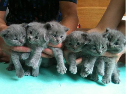 猫咪是怎么会得猫癣的?