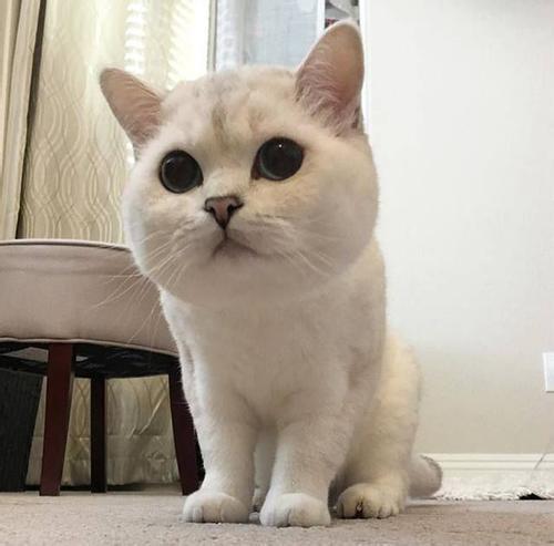 猫藓初期是什么样子