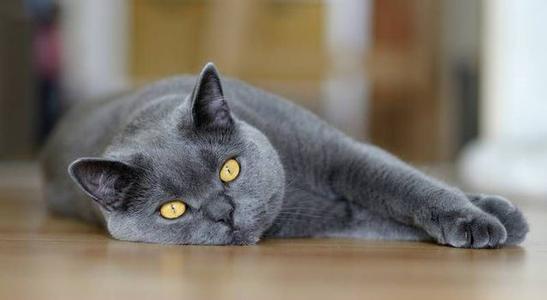 猫癣是什么 如何预防猫癣