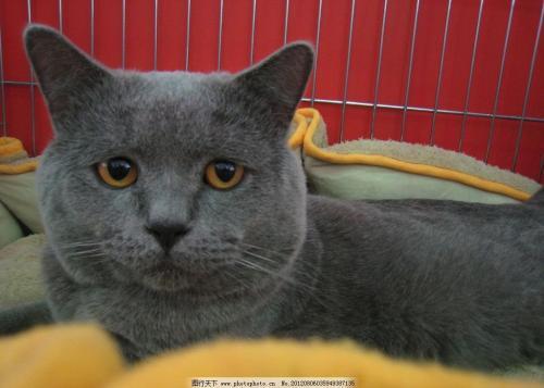 猫咪钩虫病和猫疥螨病的预防治疗
