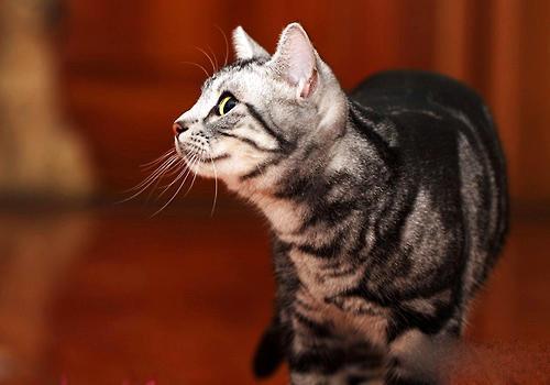 猫口炎的治疗方法