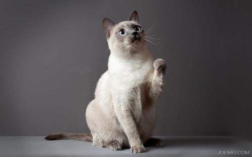猫咪咽炎的诊断要点