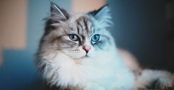 猫咪咽炎的治疗原则