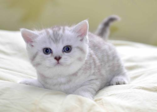中西医药结合有助于治疗猫胃肠炎