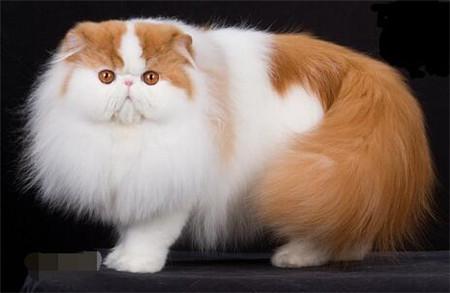 猫咪咽炎的症状表现
