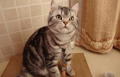 猫咪咽炎的认识和治疗
