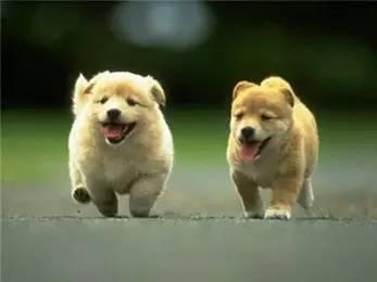 当狗狗出现吞咽障碍和流涎时,可能是咽炎悄悄来袭!