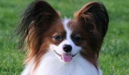 狗狗咽喉炎的症状