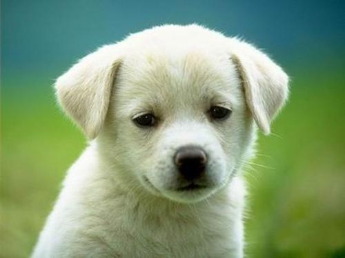 狗狗食管的检查方法