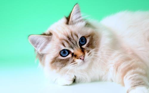 如何给猫咪一个合理健康的饮食