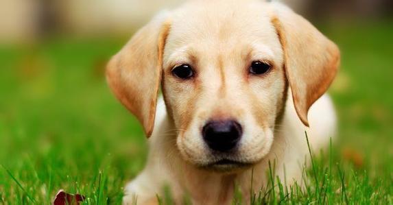 狗要怎样预防食管梗塞