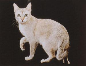 怎么治疗猫幽门阻塞