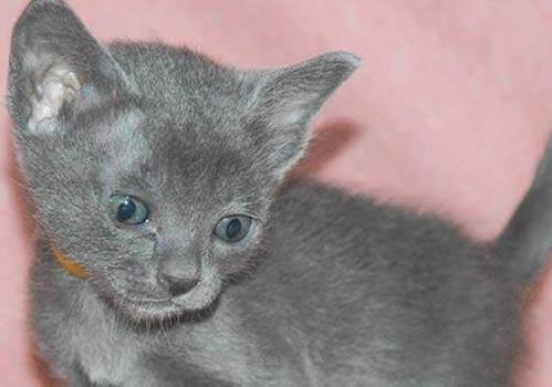 猫幽门阻塞有哪些症状