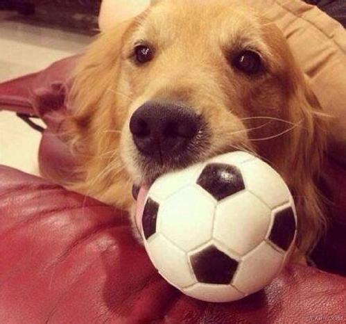中医对狗狗感冒医疗上的积极作用