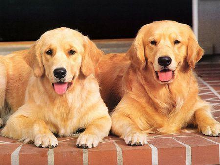 狗狗感冒的症状有哪些