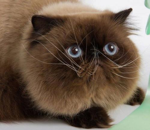 如何防治猫钩虫病