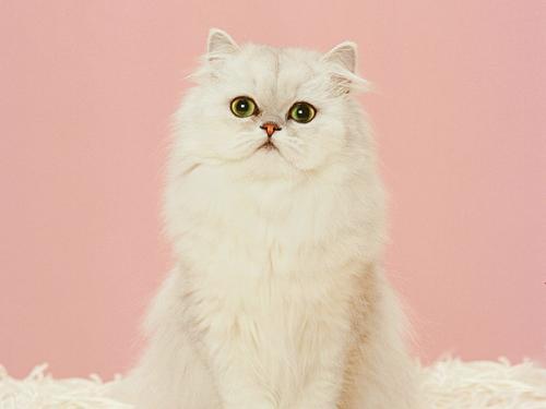 猫钩虫病的症状有哪些