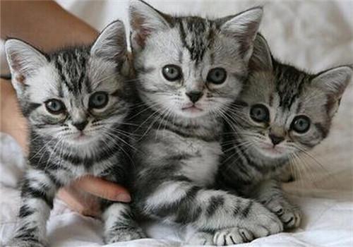 猫咪有钩虫病该怎么治疗