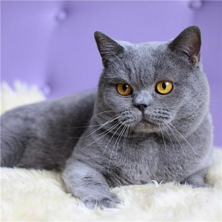 猫咪绦虫的病因治疗