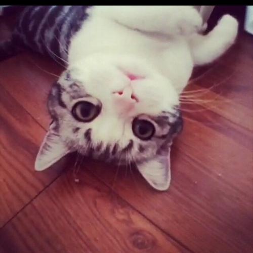 猫癣的家庭治疗法,低毒性高疗效!