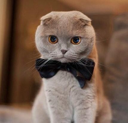 关于猫癣的小常识