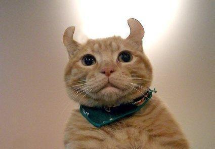 猫癣的症状与治疗方法