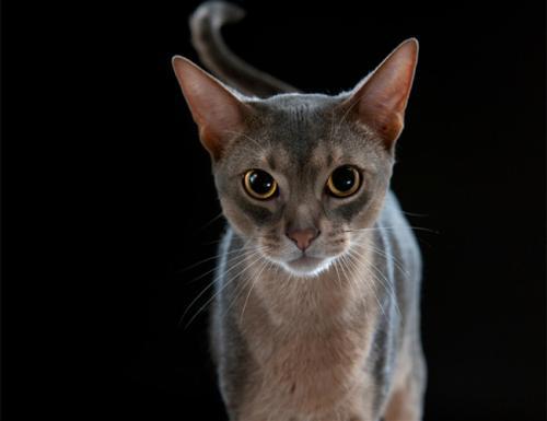 猫癣的预防和治疗方法